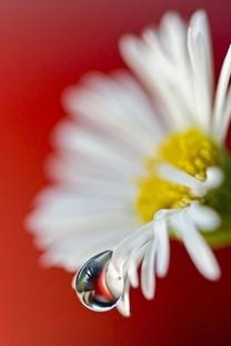 小清新唯美花朵特写图片桌面壁纸