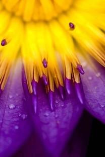 小清新唯美花朵特写图片桌面壁纸2
