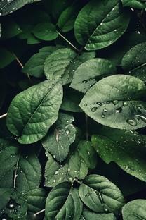 綠色植物的葉子護眼背景圖片壁紙