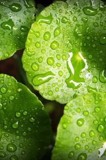 綠色植物的葉子護眼背景圖片壁紙2