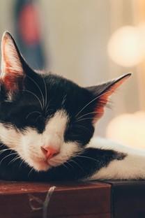 卖萌的小猫咪图片壁纸
