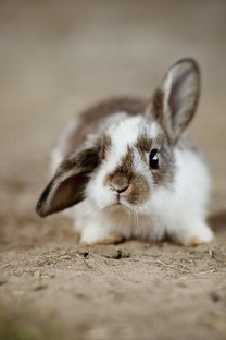 简单可爱小清新兔子图片壁纸2