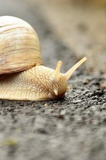坚强的蜗牛高清图片壁纸