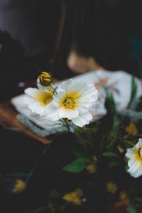 唯美小清新花朵图片壁纸2