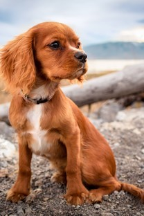 萌宠狗狗图片壁纸