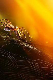微距蜘蛛特写图片壁纸