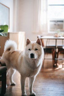 可爱狗狗高清图片壁纸2