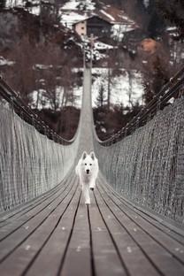 可爱蠢萌小狗狗图片高清壁纸