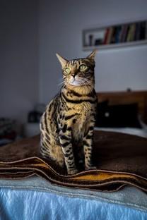 高清萌宠小猫咪图片壁纸2