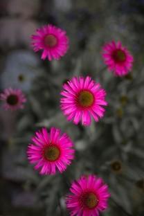唯美小清新花朵圖片壁紙4