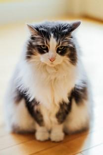 可爱萌萌的小猫咪图片壁纸