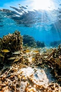 唯美海底世界桌面壁纸