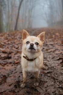 呆萌可爱狗狗图片壁纸