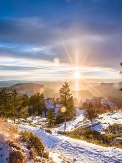 阳光下的森林景色图片壁纸