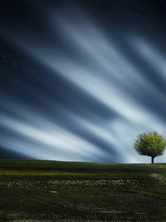 精选蓝天白云下一棵大树图片壁纸