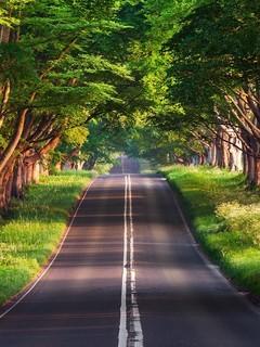 唯美宁静的林间小道图片壁纸