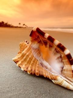 沙滩贝壳海星唯美图片壁纸