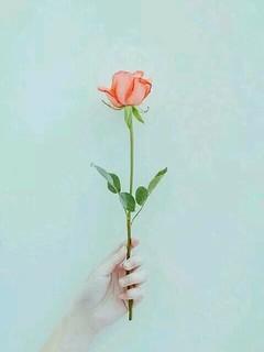 玫瑰花个性手机壁纸