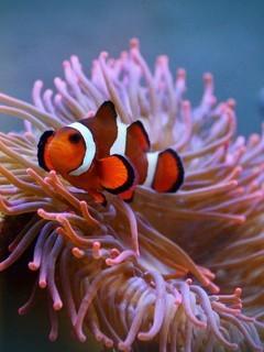 最漂亮的海底世界图片壁纸2