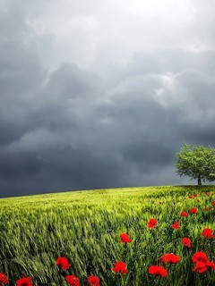 草原上孤独的树图片壁纸