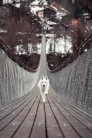 精选可爱狗狗高清桌面壁纸图片