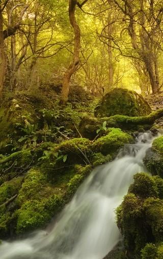 高清秋天的深林手机壁纸