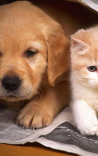 可爱小狗电脑壁纸_可爱的小狗高清壁纸 第2页-ZOL手机壁纸