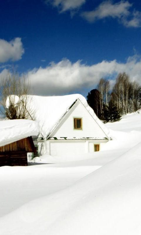 大雪覆盖的房子和树木图片壁纸