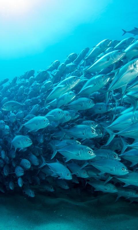 海底世界动物手机壁纸