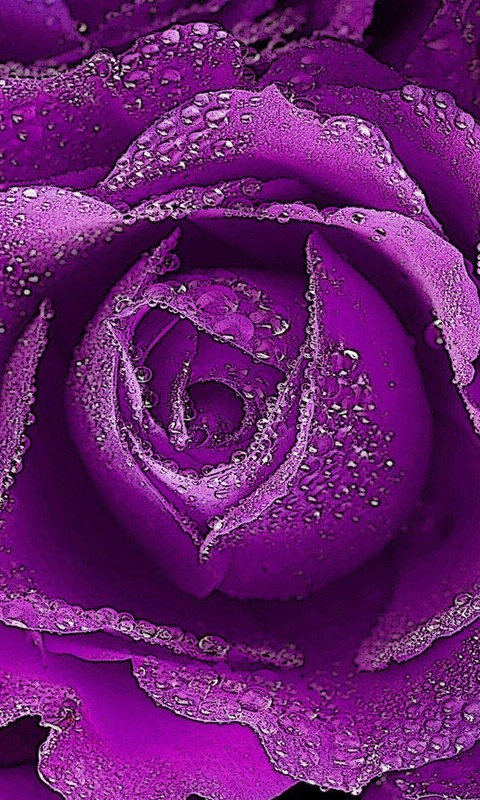 爱情玫瑰壁纸桌面