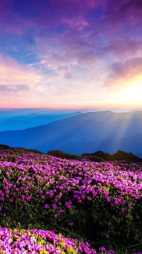 黄昏夕阳美景图片高清桌面电脑壁纸