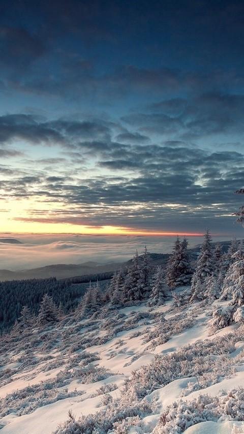 森林唯美雪地雪景图片壁纸