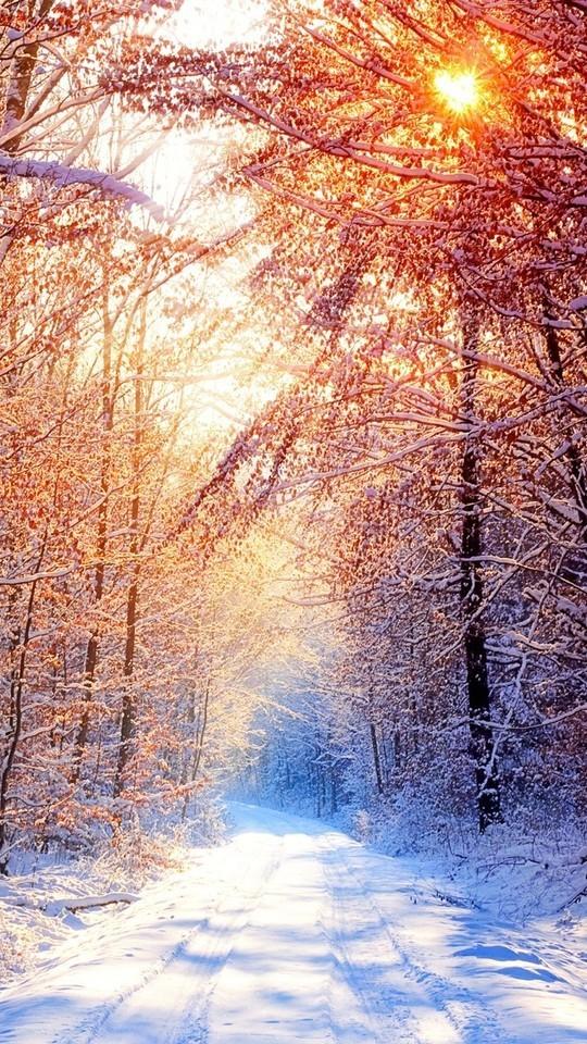 美丽的冬季风光雪景壁纸