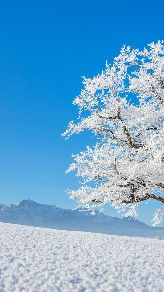 冬季天空雪地树木风景高清壁纸