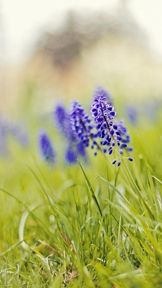 唯美小清新草地和花花图片壁纸