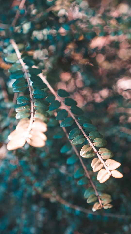 另类非主流风格植物图片壁纸