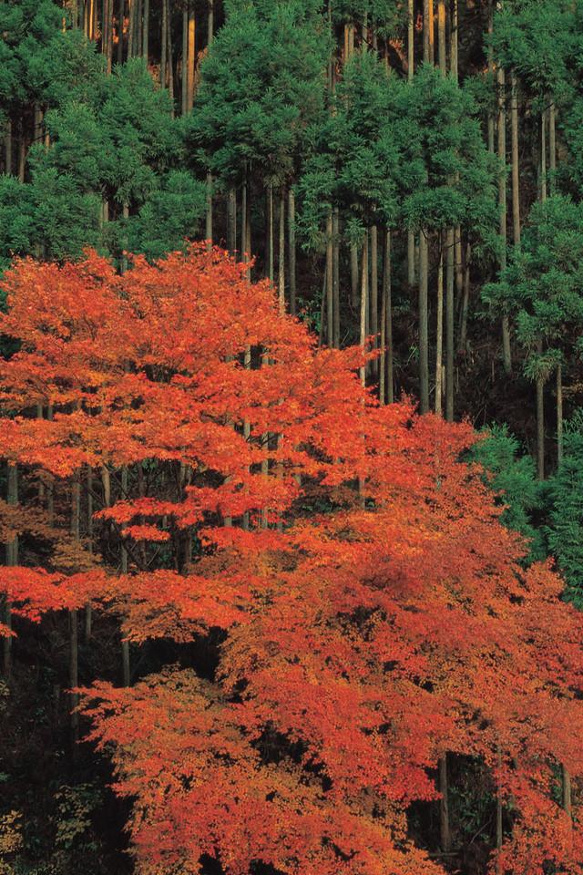 韩国风景摄影