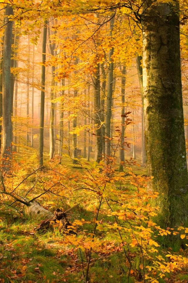 秋天的树林自然风景壁纸