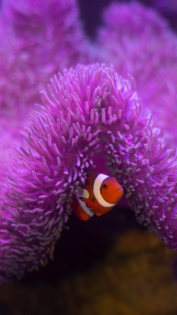 神奇梦幻的海底世界图片壁纸