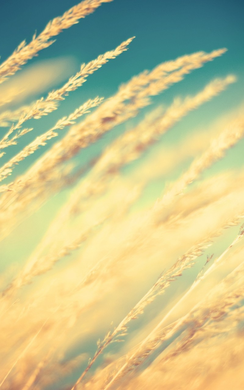落日夕阳唯美风景图片壁纸